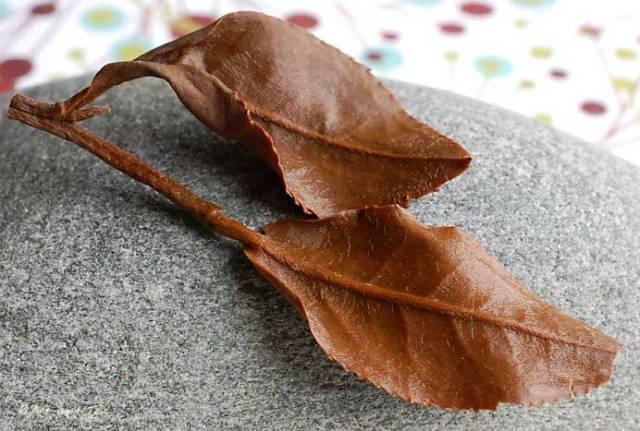 Oolong Extra Fancy Wet Leaf Set 08-31-