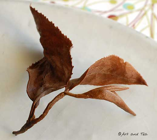 Eastern Beauty Oolong Wet Leaf 2 11-30-13