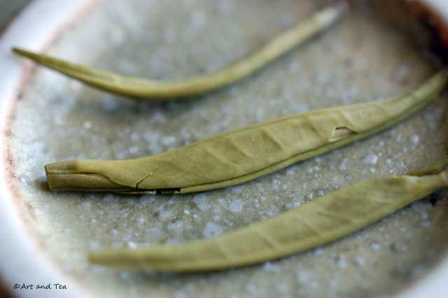 Qing Zhen Wet Leaf 06-21-14