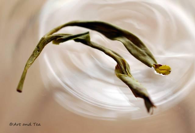 Huangshan Mao Feng Wet Leaf 09-13-14