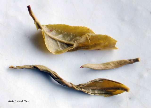 Yunnan Silver Tip Wet 11-22-14