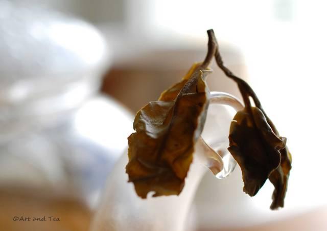 Risheehat Est. FF Darjeeling Wet Leaf 04-04-15